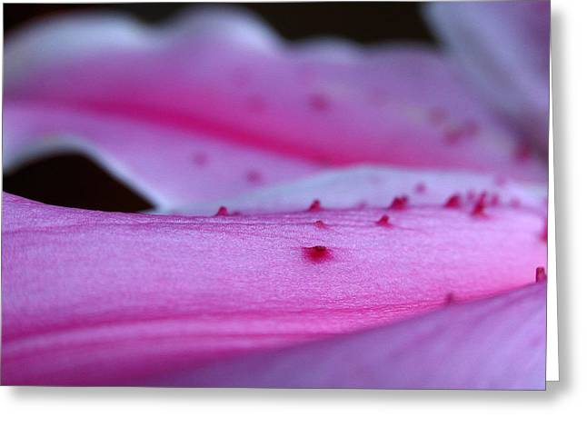 Lilly Pad Greeting Cards - Lily Sepal Greeting Card by Juergen Roth