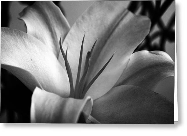 Chic Greeting Cards - Lily Greeting Card by Sumit Mehndiratta