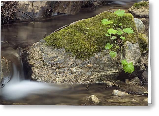 Big Sur California Greeting Cards - Limekiln Creek Flowing In Limekiln Greeting Card by Rich Reid