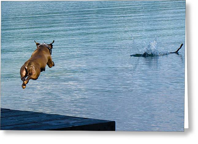 Diving Dog Greeting Cards - Line of sight Greeting Card by Deanna Maxwell