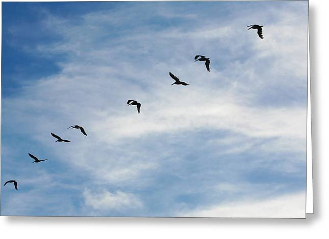 Flying Animal Greeting Cards - Linear Flock of Pelicans Greeting Card by Marilyn Hunt