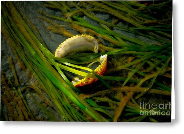 Alga Greeting Cards - Linguini with Clams Greeting Card by Venetta Archer