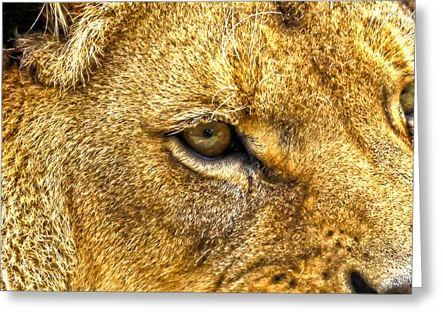 Growling Greeting Cards - Lion Eye Greeting Card by Steve McKinzie