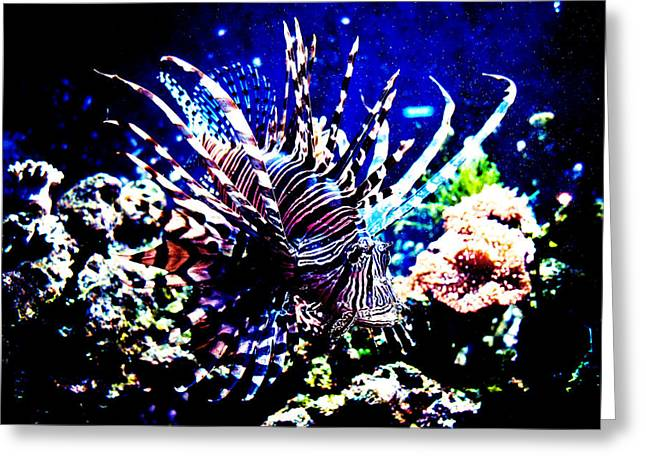 Lionfish Greeting Cards - Lion fish at Oklahoma Aquarium 2005 Greeting Card by Toni Hopper