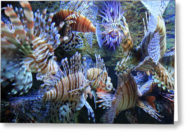 Aquarium Fish Greeting Cards - Lion Fish Greeting Card by Carol Groenen