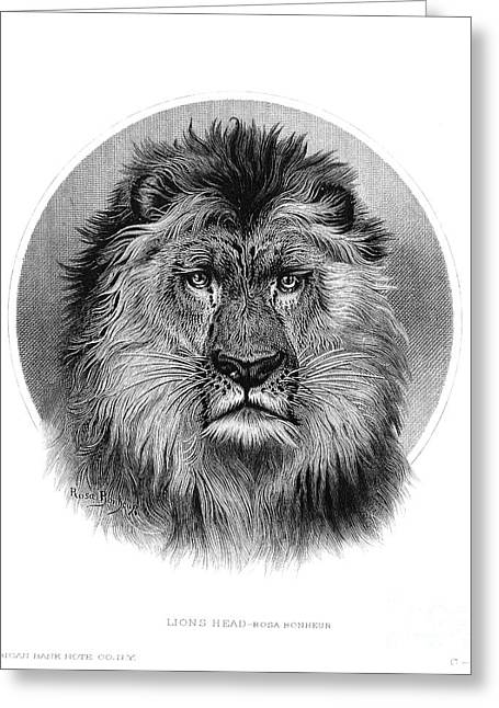 Biology Greeting Cards - Lion Greeting Card by Granger