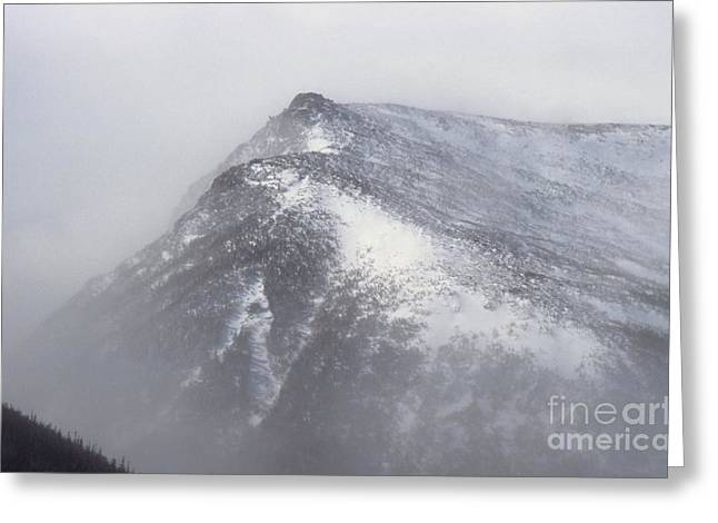 Blowing Snow Greeting Cards - Lion Head - Mount Washington New Hampshire Greeting Card by Erin Paul Donovan