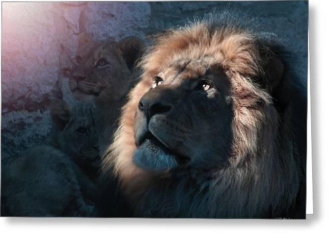 Lion Light Greeting Card by Bill Stephens
