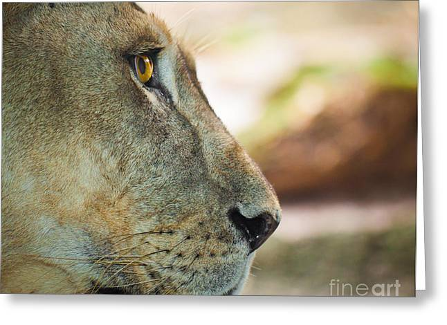 Female Greeting Cards - Lion portrait Greeting Card by Johan Larson