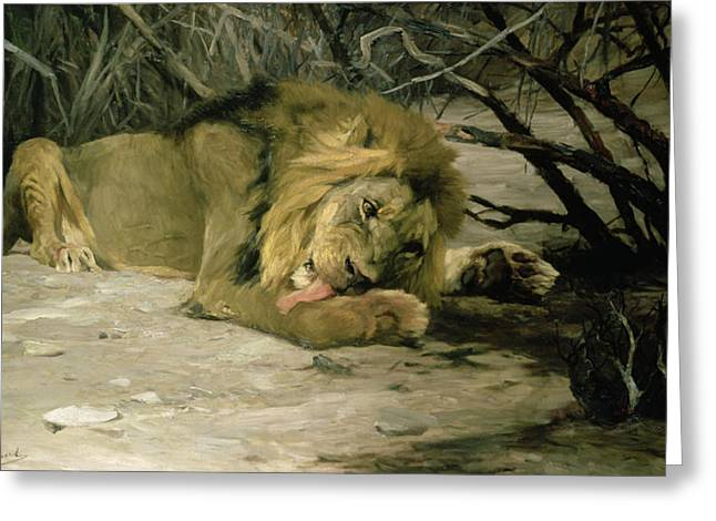 Undergrowth Greeting Cards - Lion Reclining in a Landscape Greeting Card by Wilhelm Kuhnert