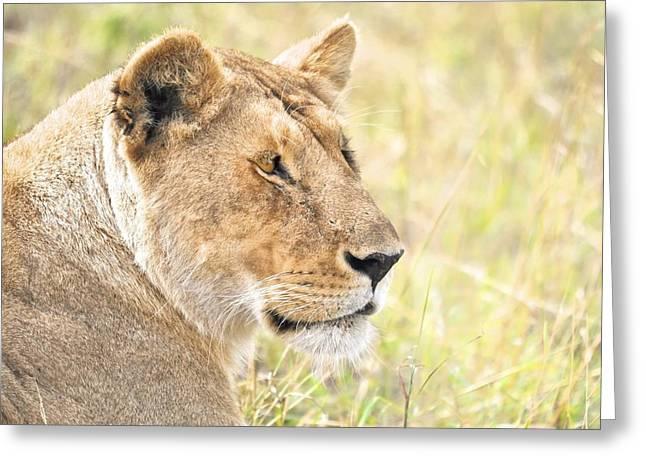 Lioness Greeting Cards - Lioness 2 Greeting Card by Richard Matthews