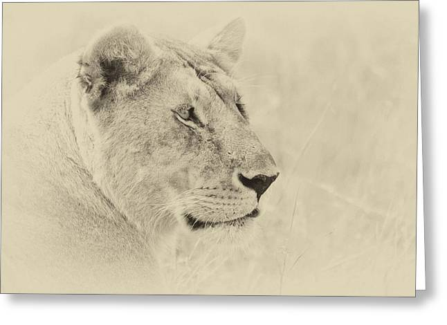 Lioness Greeting Cards - Lioness 2 sepia Greeting Card by Richard Matthews