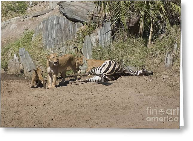 Lioness Greeting Cards - Lioness and Cubs over Fresh Kill Greeting Card by Darcy Michaelchuk