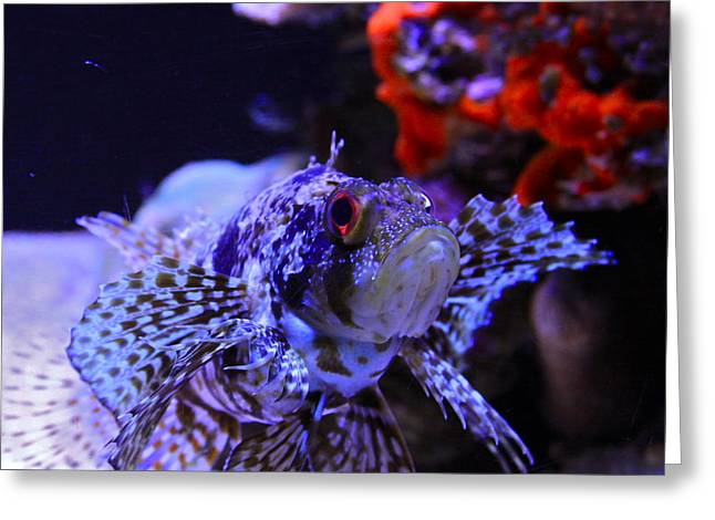 Lionfish Greeting Cards - Lionfish Greeting Card by Karon Melillo DeVega