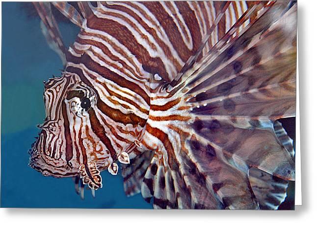 Lionfish Greeting Cards - Lionfish Greeting Card by Larry Linton