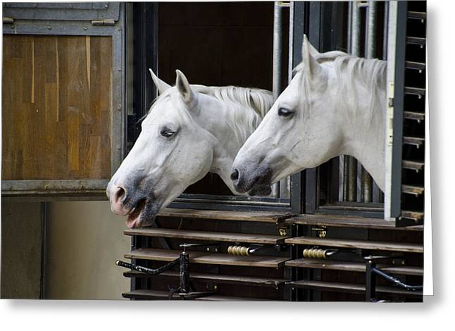 Berghoff Greeting Cards - Lipizzan Horses - Vienna Austria Greeting Card by Jon Berghoff