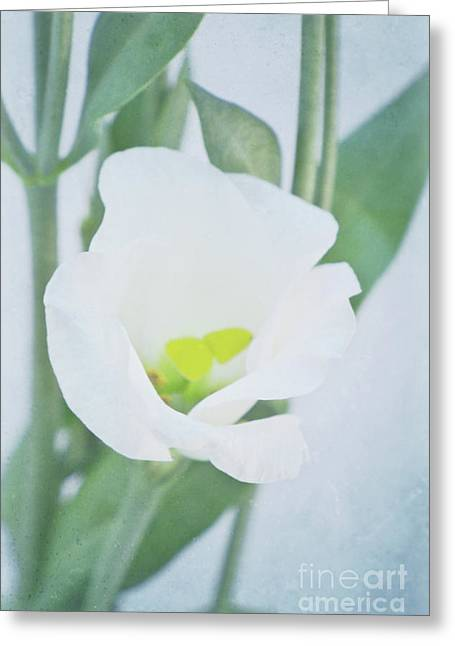 Decorativ Photographs Greeting Cards - Lisianthus Greeting Card by Angela Doelling AD DESIGN Photo and PhotoArt