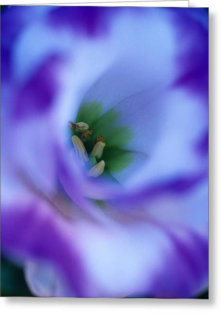 Flower Photos Greeting Cards - Lisianthus Greeting Card by Kathy Yates