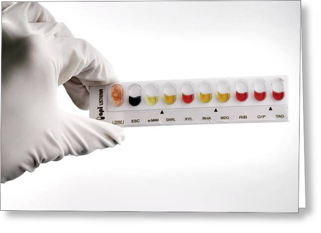 Microbiological Greeting Cards - Listeria Indentification Greeting Card by Tim Vernon, Lth Nhs Trust