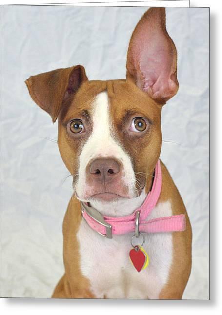 Humane Society Greeting Cards - Lita Greeting Card by Julie Niemela