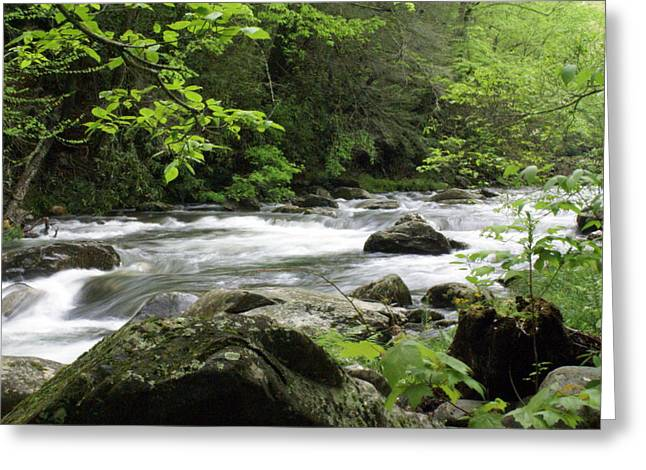 Smokey Mountains Greeting Cards - Litltle River 1 Greeting Card by Marty Koch