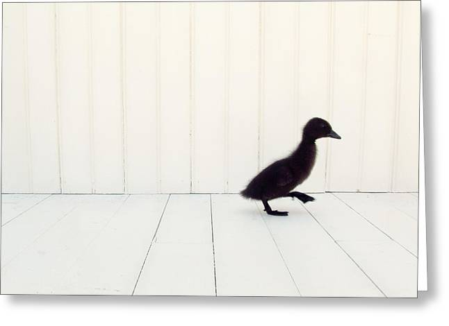 Ducklings Photographs Greeting Cards - Little Greeting Card by Amy Tyler