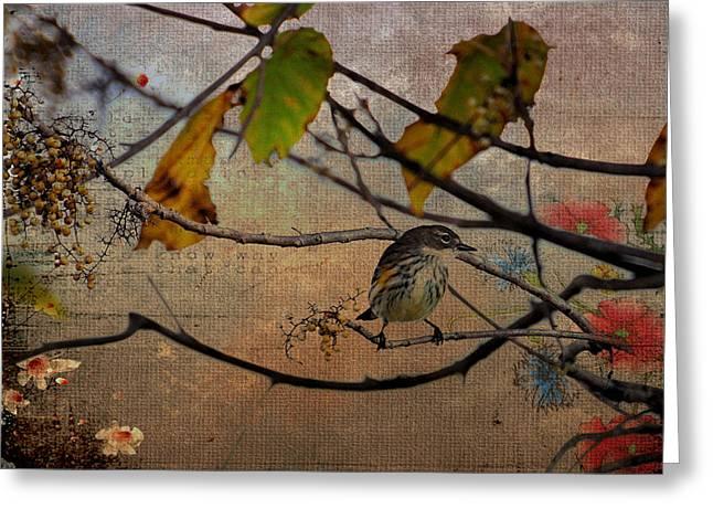 Feeding Birds Greeting Cards - Little Bird Greeting Card by Todd Hostetter