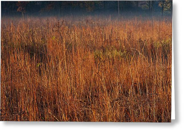 Prairie Photographs Greeting Cards - Little Bluestem Grasses On The Prairie Greeting Card by Steve Gadomski