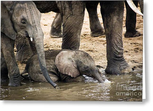 Addo Greeting Cards - Little Elephant Blowing Bubbles Greeting Card by Darcy Michaelchuk