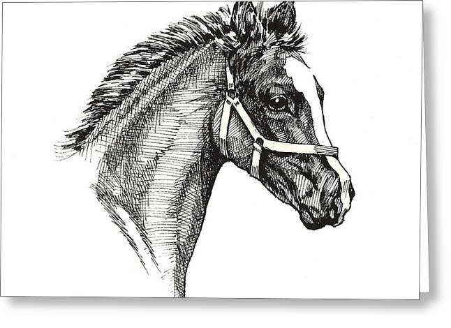 Equestrian Greeting Cards - Little Filly Greeting Card by Richard De Wolfe