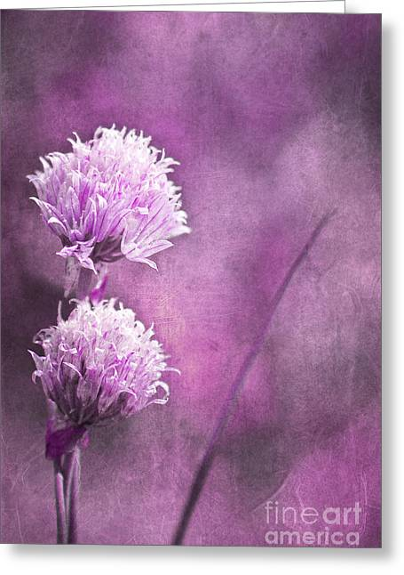 Romance Mixed Media Greeting Cards - Little Flower Greeting Card by Angela Doelling AD DESIGN Photo and PhotoArt