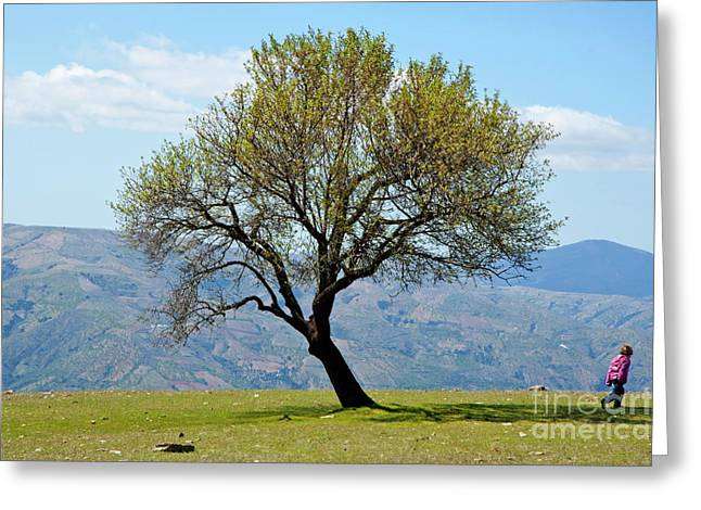 Sami Sarkis Photographs Greeting Cards - Little girl walking past a tree in springtime Greeting Card by Sami Sarkis