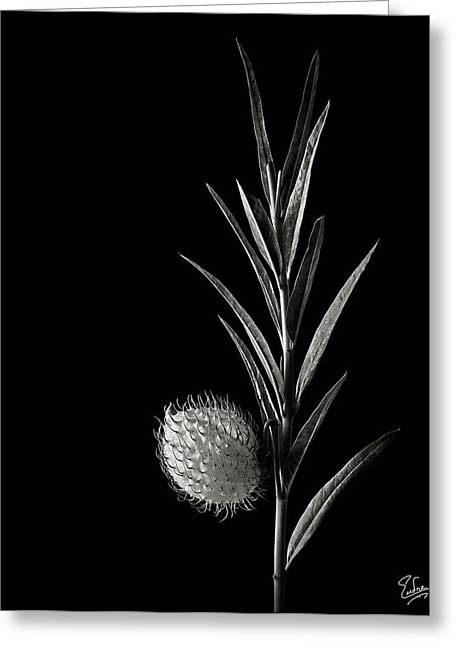 Flower Photos Greeting Cards - Little Green Balls in Black and White Greeting Card by Endre Balogh