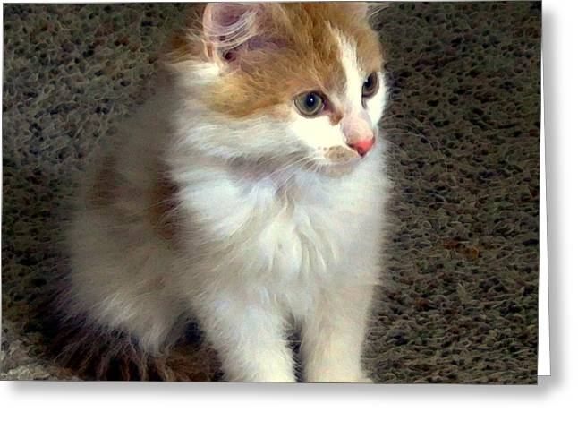 Felines Dale Ford Greeting Cards - Little Guy Greeting Card by Dale   Ford