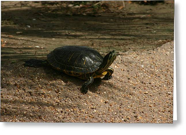Turtle Pyrography Greeting Cards - Little guy Greeting Card by Stephanie Hopkins