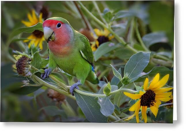 Peach-faced Lovebird Greeting Cards - Little Lovebird Greeting Card by Saija  Lehtonen