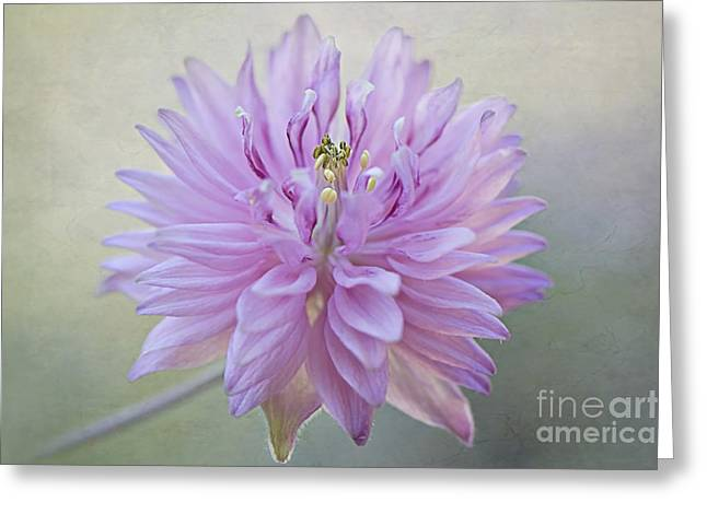 Close Focus Floral Greeting Cards - Little Pink Greeting Card by Jacky Parker