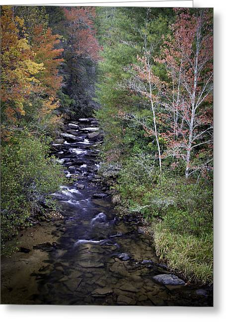 Foliage Photographs Greeting Cards - Little River - North Carolina Autumn Scene Greeting Card by Rob Travis