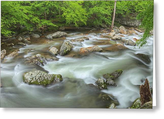 Beautiful Creek Greeting Cards - Little River Rapids Greeting Card by Dean Pennala