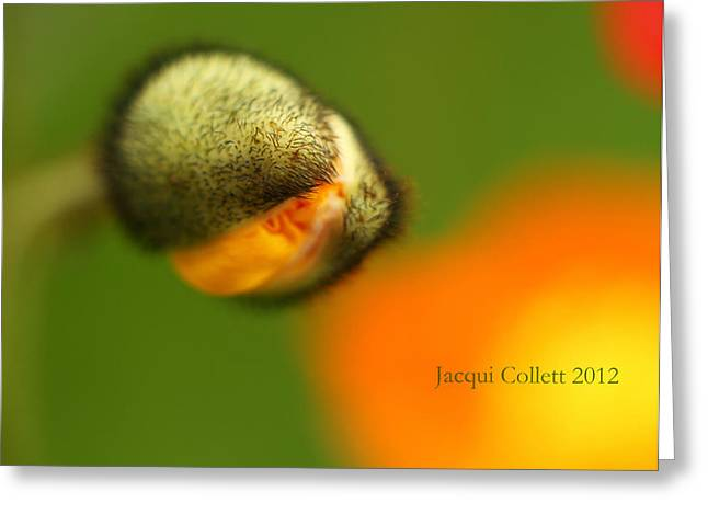 Abstract California Poppies Greeting Cards - Little shop of Horrors Greeting Card by Jacqui Collett