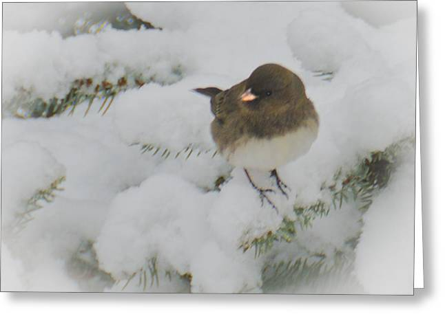 Wild Orchards Greeting Cards - Little Snow Bird Greeting Card by LeeAnn McLaneGoetz McLaneGoetzStudioLLCcom