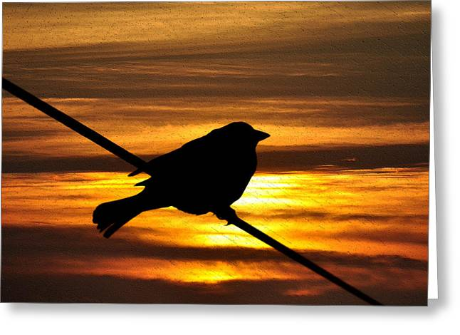 Sillouette Greeting Cards - Little Sparrow Greeting Card by Bill Cannon