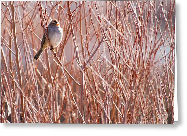 Orange Beak Greeting Cards - Little Sparrow Greeting Card by Sabrina L Ryan