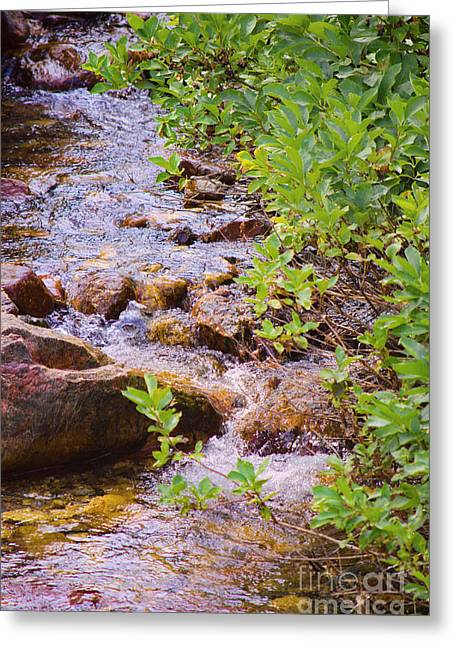 Babbling Greeting Cards - Little Stream - Utah Greeting Card by Donna Van Vlack