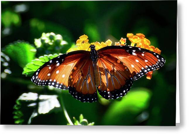 Queen Butterfly Greeting Cards - Little Treasures Greeting Card by Saija  Lehtonen