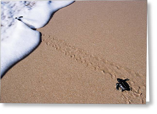 Wave Up Close Greeting Cards - Little Turtle Walking Towards The Sea Greeting Card by Axiom Photographic