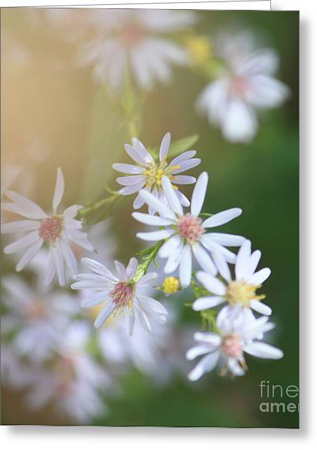 Indiana Flowers Greeting Cards - Little Whites Greeting Card by Brook Steed