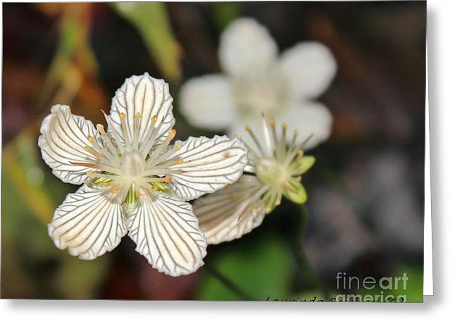Little Wildflower Greeting Card by Laurinda Bowling