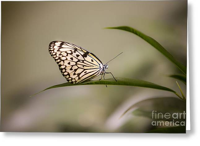 Leda Photography Greeting Cards - Little Zebra Greeting Card by Leslie Leda