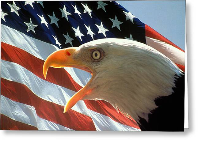 Flag Greeting Cards - Live Free or Die Greeting Card by Carl Purcell
